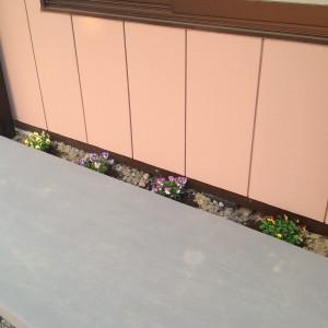 事務所前の花。