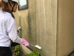 西三河西尾市植物性洗浄剤